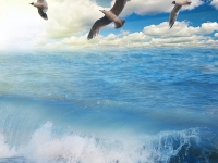 gulls flying above sunny blue sea