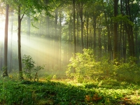 Beautiful morning in the forest; Shutterstock ID 495197701; Purchase Order: -
