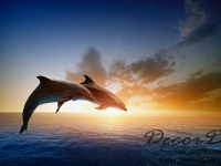 fotooboi_givotnie_delfin