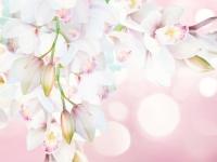 fotooboi_orhidei_103