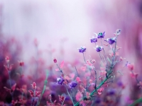 fotooboi_pole_46