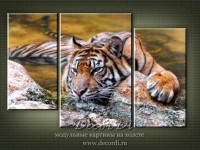 modulnaya_kartina_priroda_koshki_35