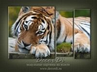 modulnaya_kartina_priroda_koshki_37