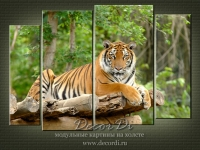 modulnaya_kartina_priroda_koshki_39