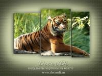 modulnaya_kartina_priroda_koshki_41