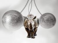 strong like rhino